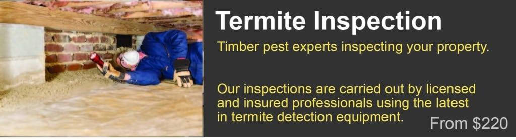 Termite inspection cost Tamborine mountain