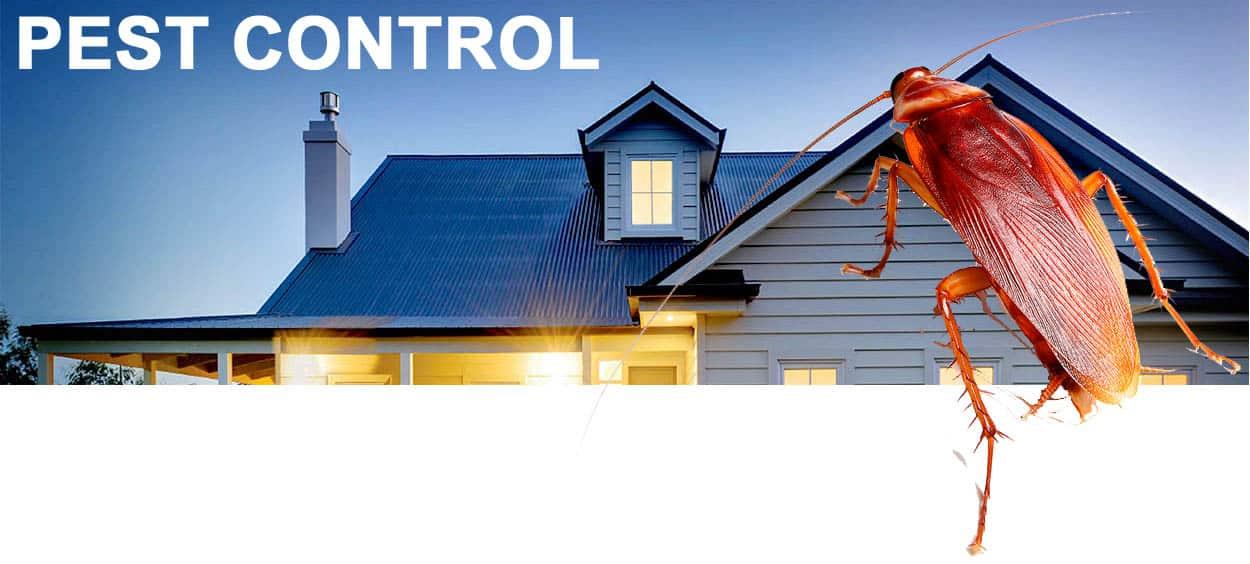 Commercial pest control Gold Coast