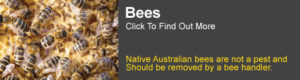 Bee Information