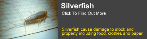 silverfish control Grafton