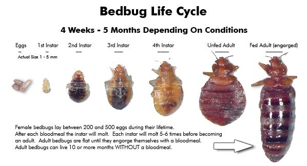 Bed Bug Treatment East Coast Building Pest