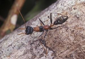 Ant Control Gold Coast
