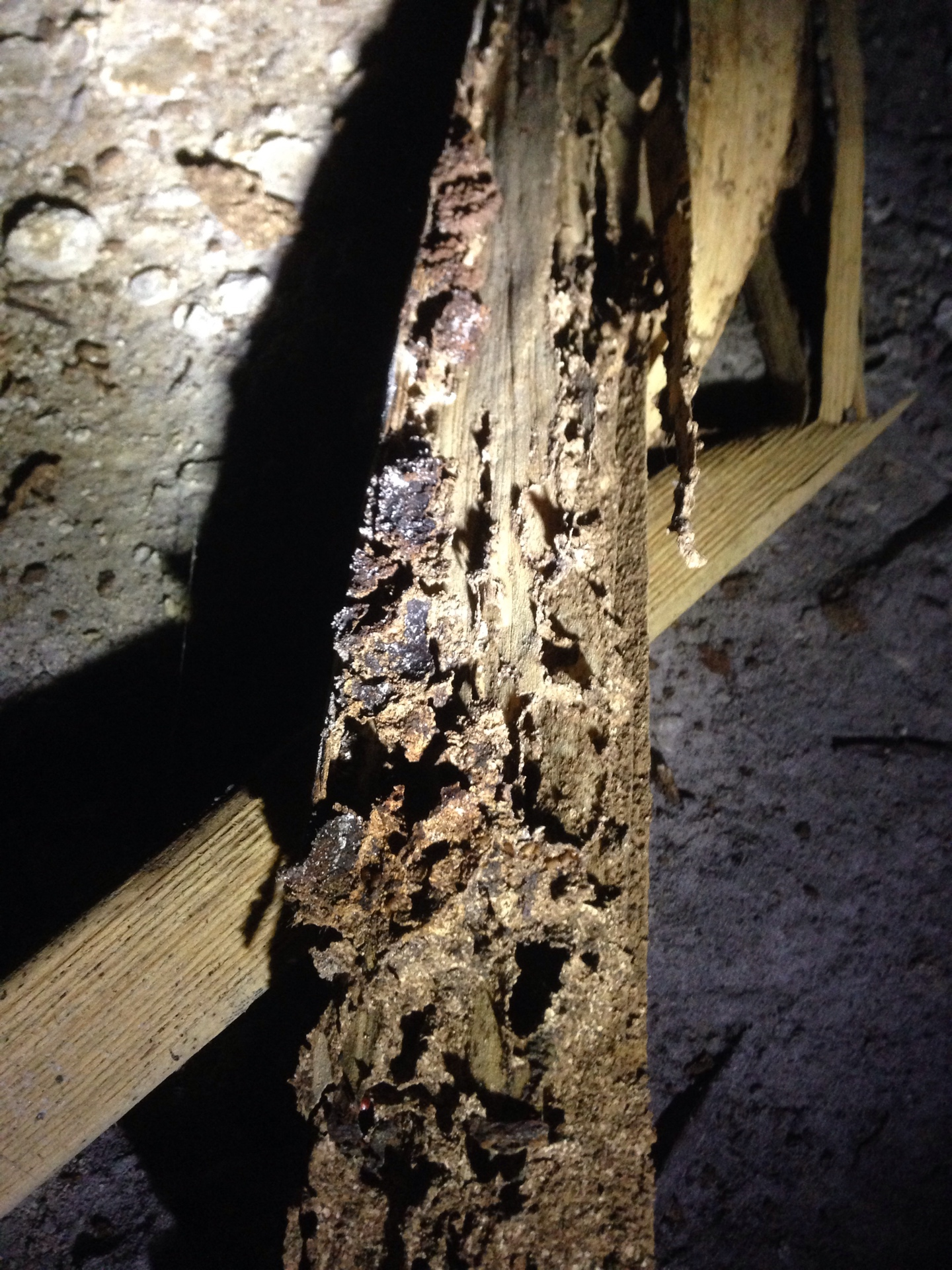 Understanding Building Pest Inspections