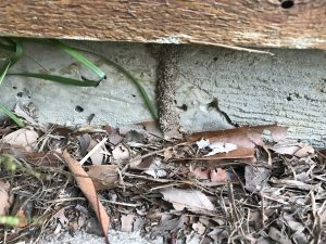 Reducing the threat of termites
