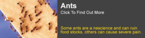 Ant Information