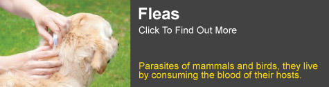 flea treatment Grafton