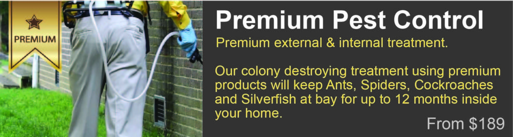 12 month warranty pest lismore