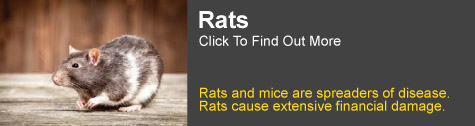 rat control Grafton