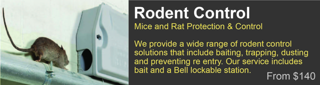 rodent control Grafton