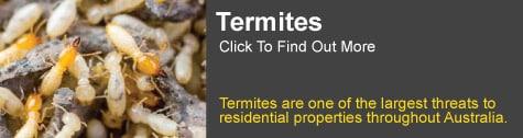 termite control Tamborine mountain