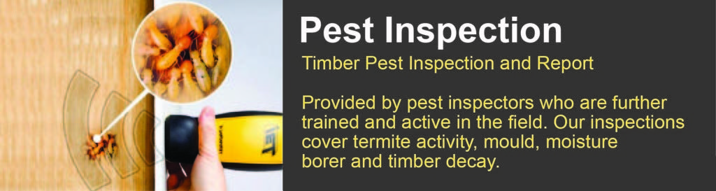 pest inspection Beaudesert